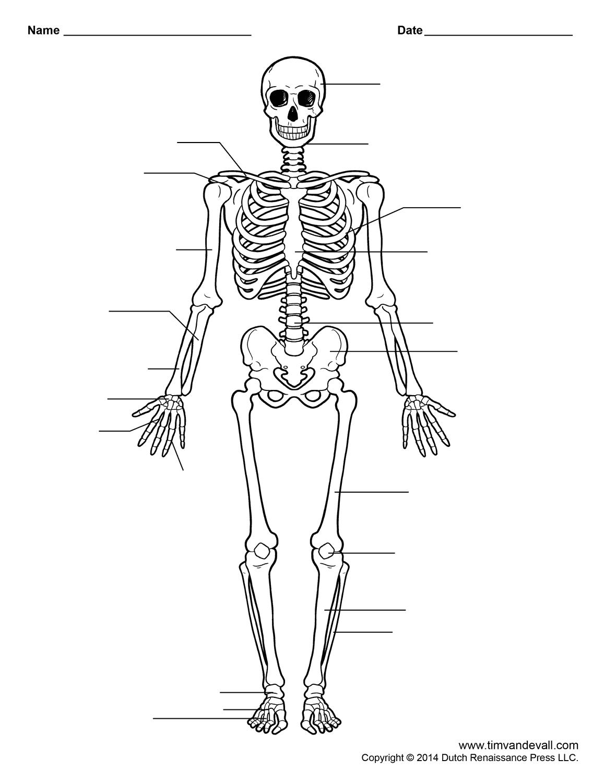 Free Printable Human Skeleton Worksheet For Students And Teachers - Printable Skeletal System Crossword Puzzle