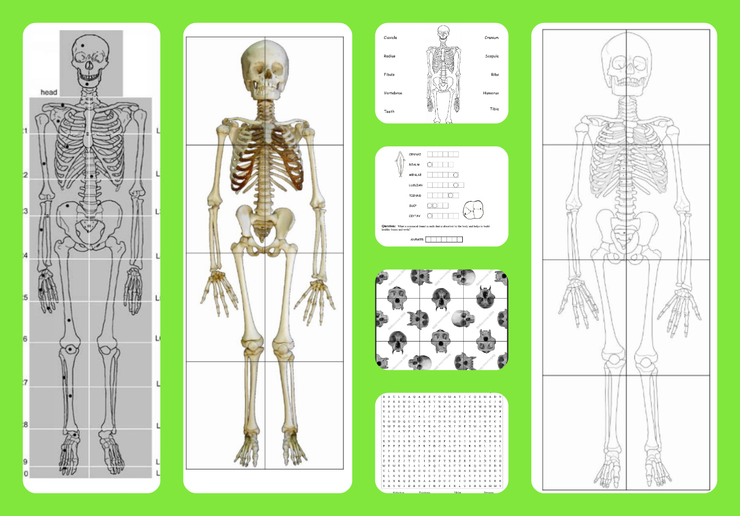 graphic about Printable Skeletal System known as The Skeletal Method: Fingers-Upon Studying Materials Human