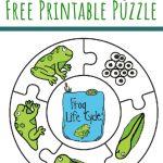 Frog Life Cycle Printable Puzzle | Pre School | Frog Life, Lifecycle   Printable Puzzle For Preschool