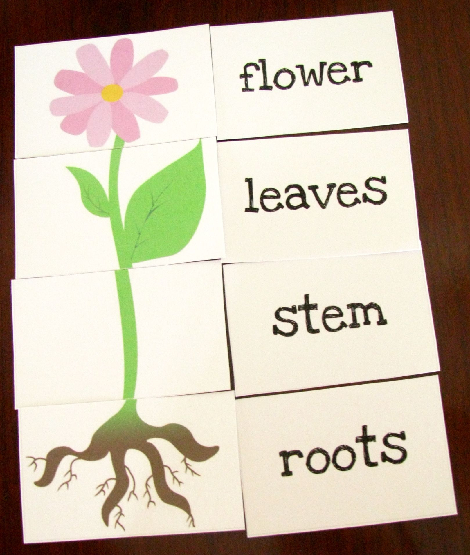 Great Printable Resources – Plants | Preschool | Parts Of A Plant - Printable Flower Puzzle