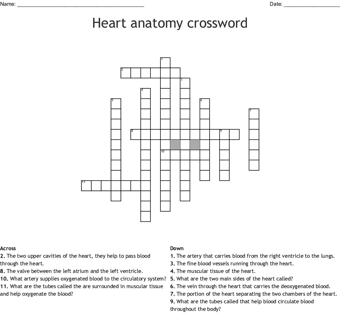 Heart Anatomy Crossword - Wordmint - Anatomy Crossword Puzzles Printable