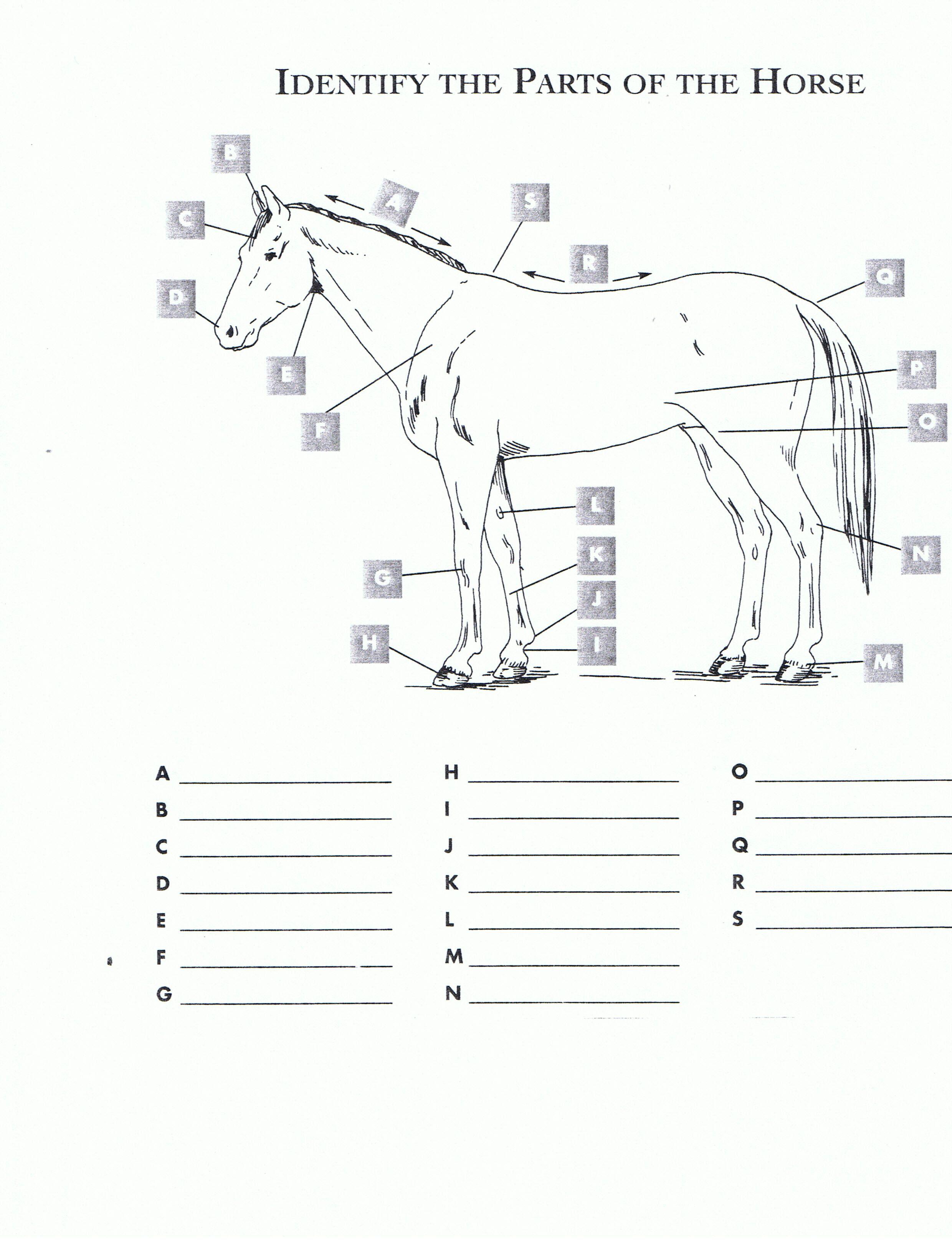 Pincindy Dillingham On Homeschool Highschool | Horses, Horseback - Printable Horse Puzzles