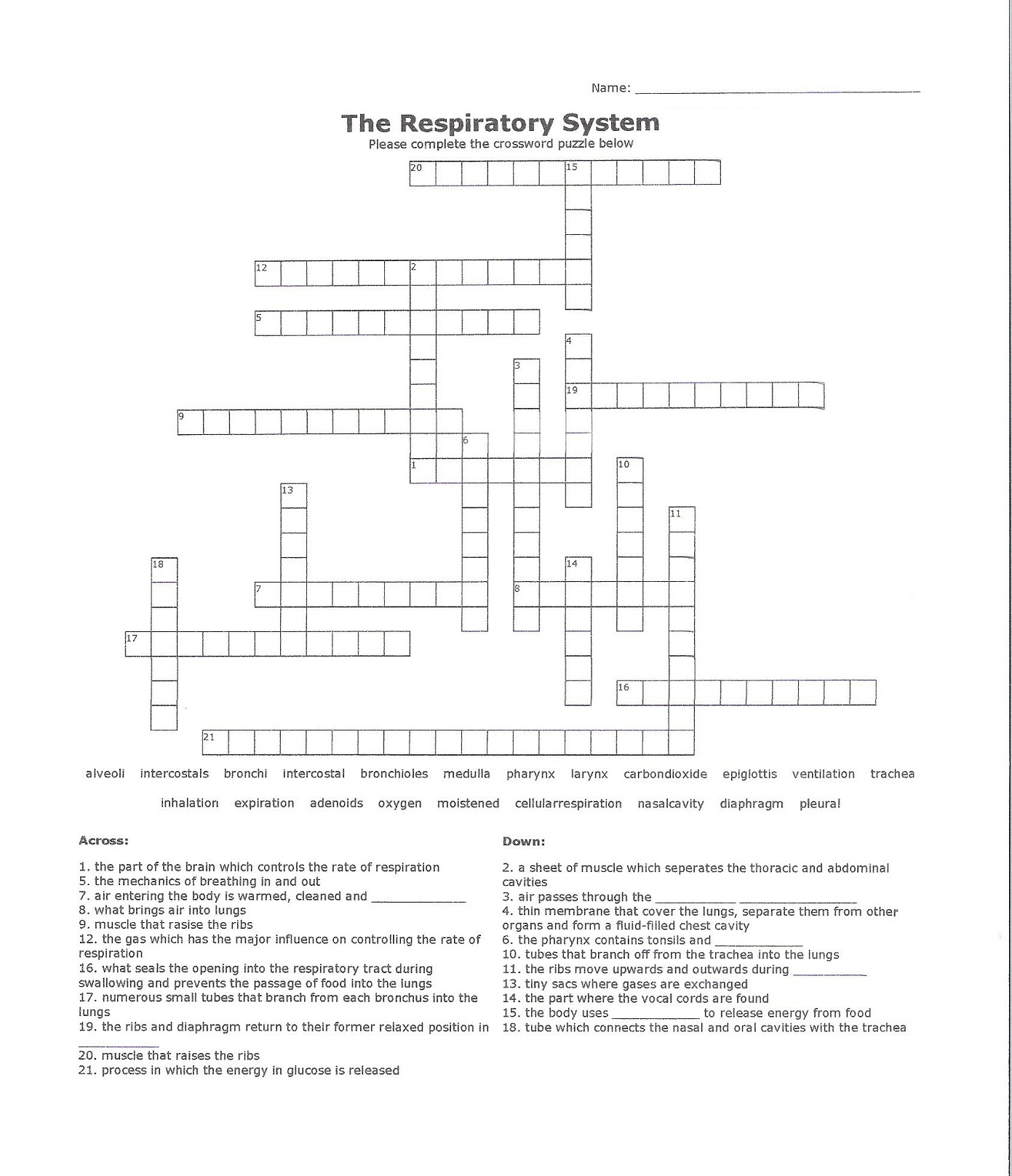 Respiratory System Crossword Puzzle | Activity Shelter - Respiratory System Crossword Puzzle Printable