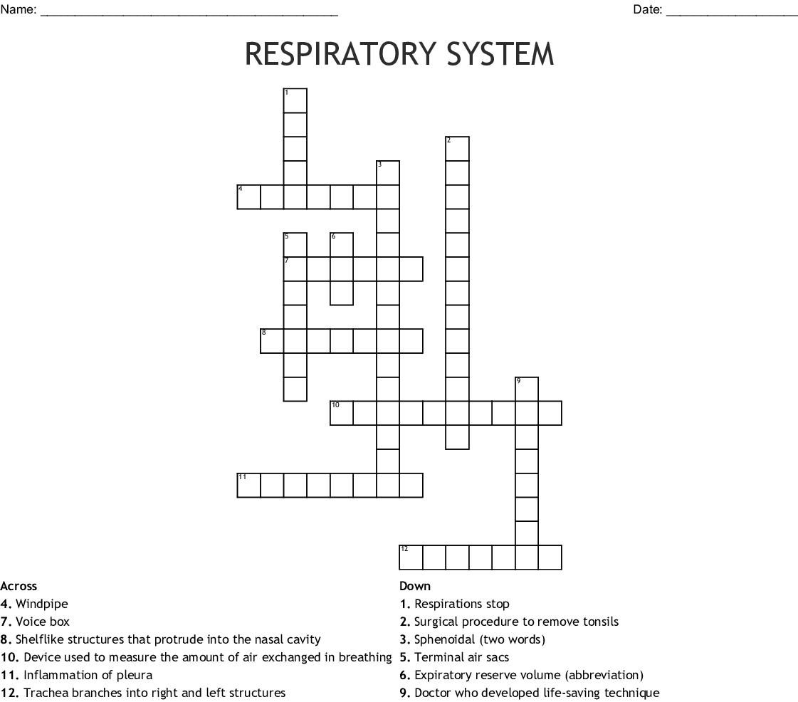 Respiratory System Crossword - Wordmint - Respiratory System Crossword Puzzle Printable