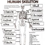 Skeletal System Crossword Puzzle Answers | Healthy Hesongbai   Skeletal System Crossword Puzzle Printables