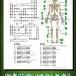 Skeletal System Crossword With Diagram {Editable} | Tpt Science   Skeletal System Crossword Puzzle Printables