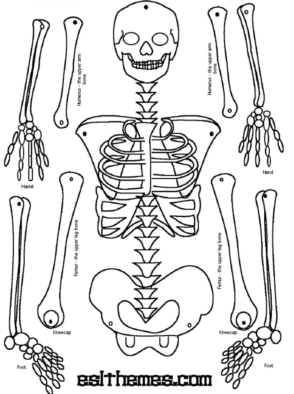 graphic relating to Printable Human Skeleton named Printable Skeleton Puzzle Printable Crossword Puzzles